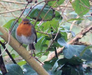 Ystäväiseni Robin
